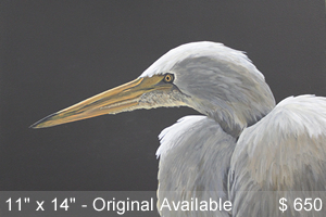Great Egret Study