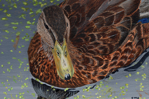 Solitude - Female Mallard