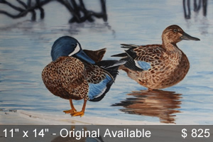 Winter Thaw - Blue-winged Teal